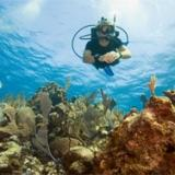 diver gliding over coral reef